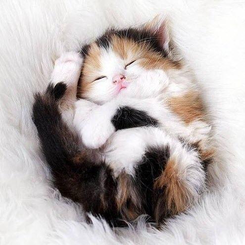 calico kitten fur ball