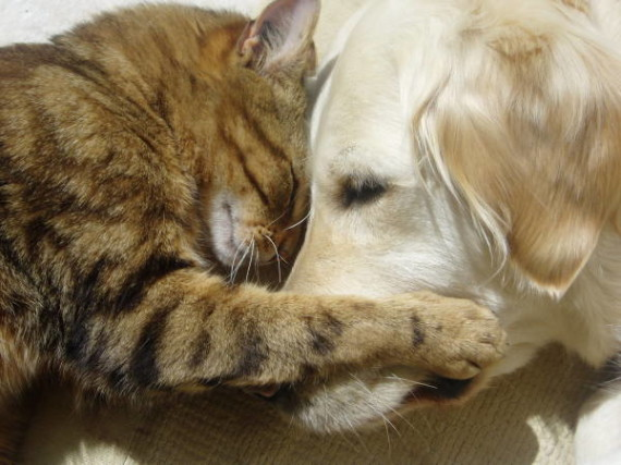 cat-dog-cuddle