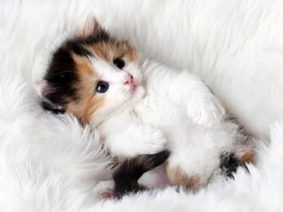 cute furball