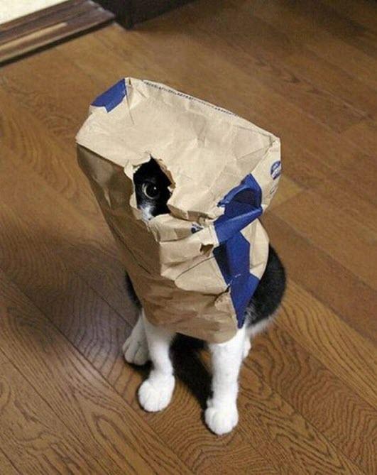 hide and seek 11