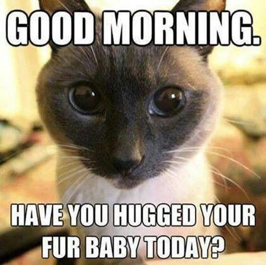 hug fur baby