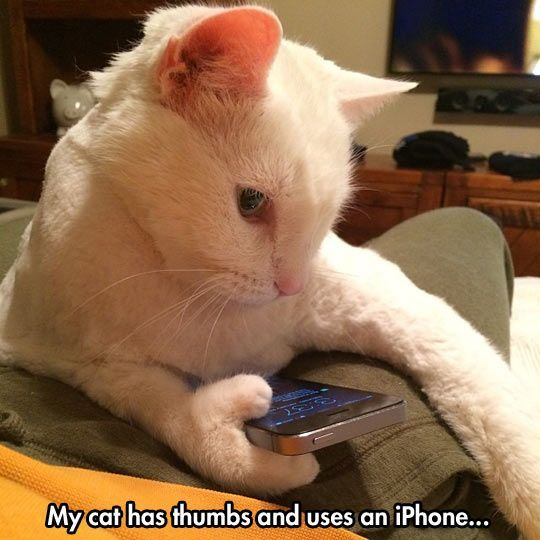 iphone cat