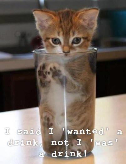 kitten in glass