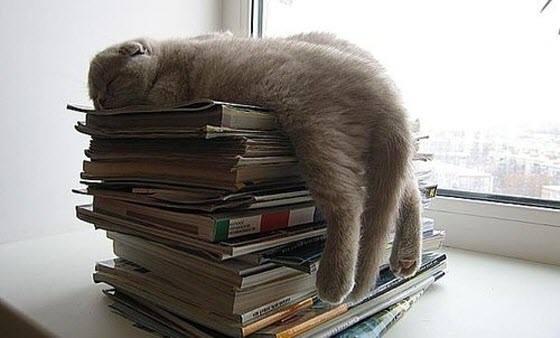 kitty on magazines