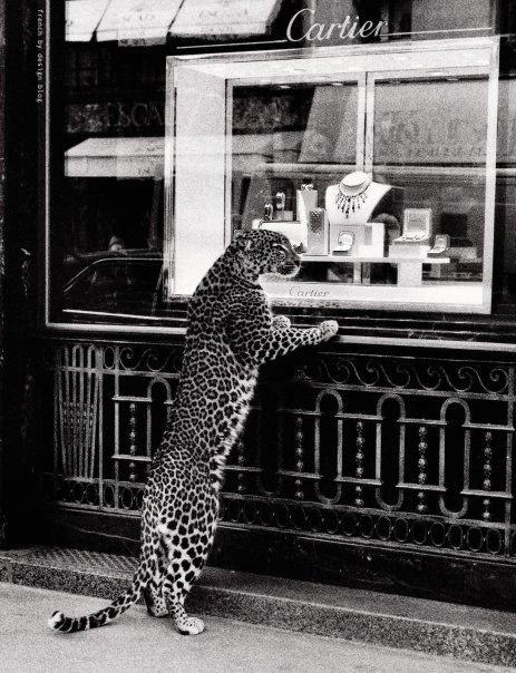 leopard cartier