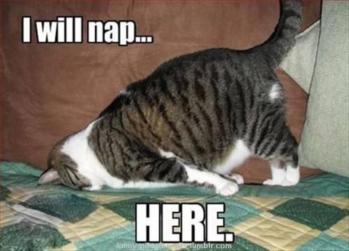 nap lol