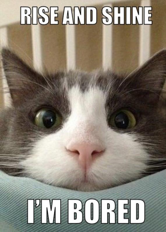 Beautiful, Blue Eyed Kitten - 21st July 2014