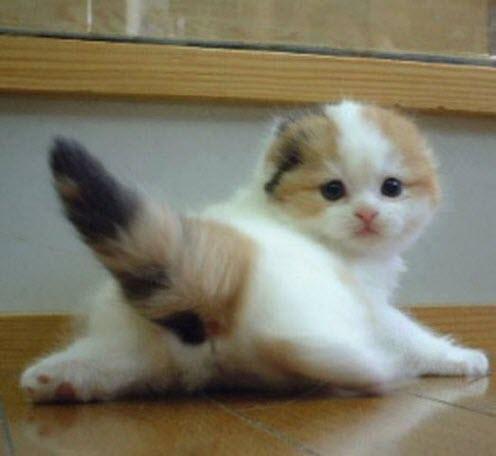 tail kitten
