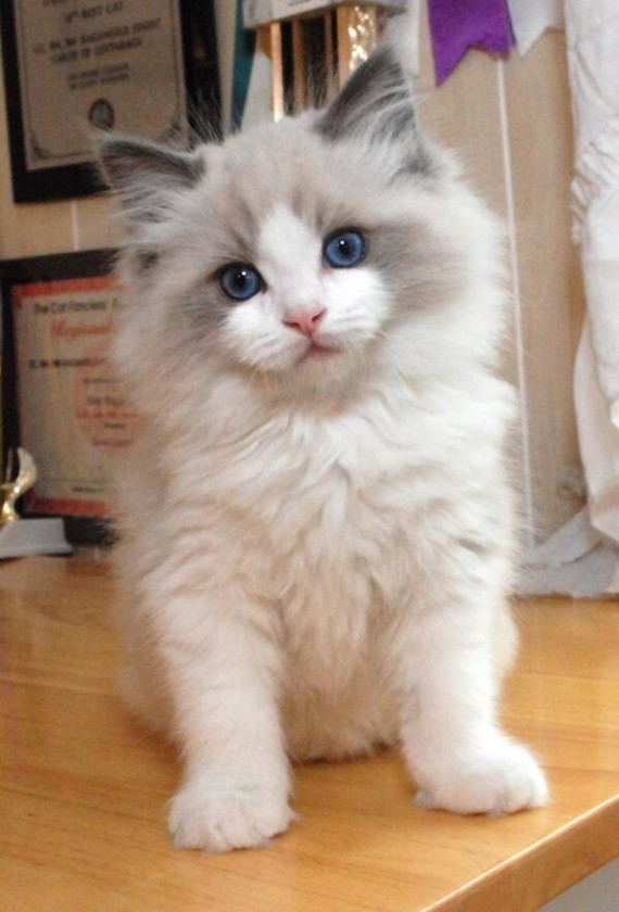 white fluff blue