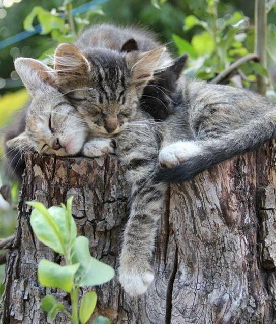 3 cats log