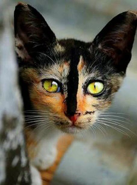 amazing eyes and markings