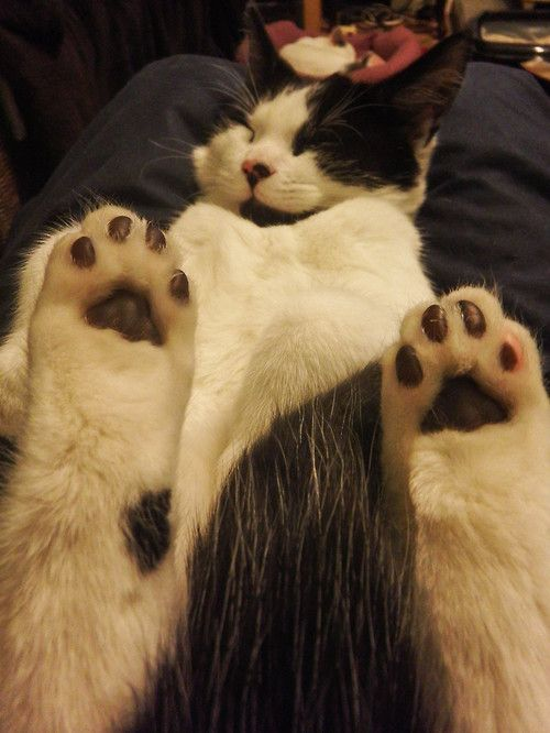 applause for the paws