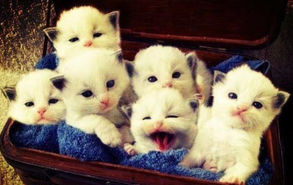 box of cats