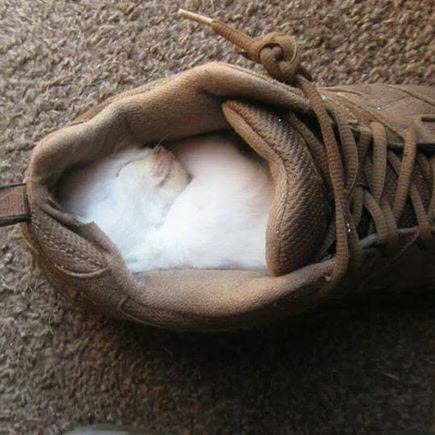 cat ion my shoe