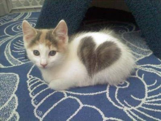 heart kitty