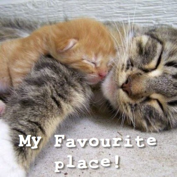 kitten sleeps with mum