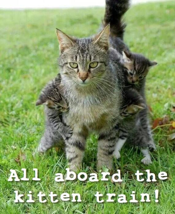 kitten train