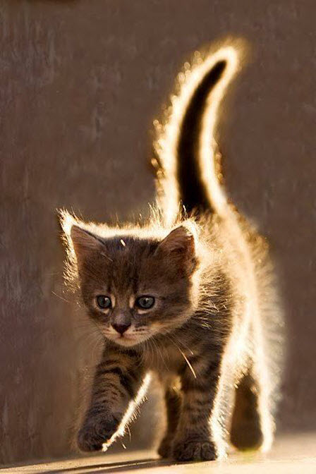 kitten with glow