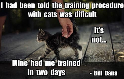 kitty trained human