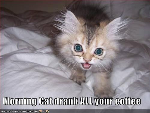 morning cat