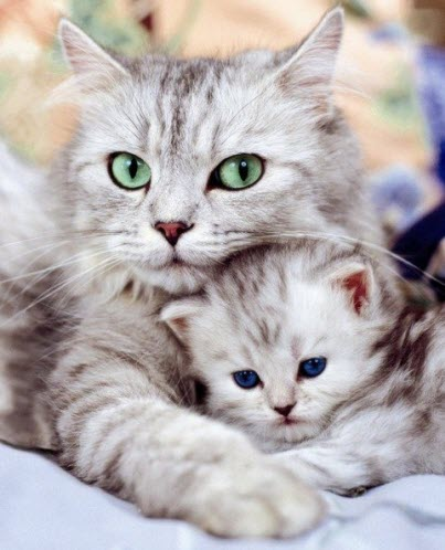 mum and baby kitten (2)