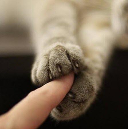 paws 10