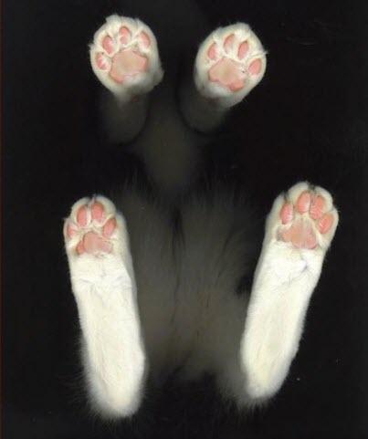 paws 11
