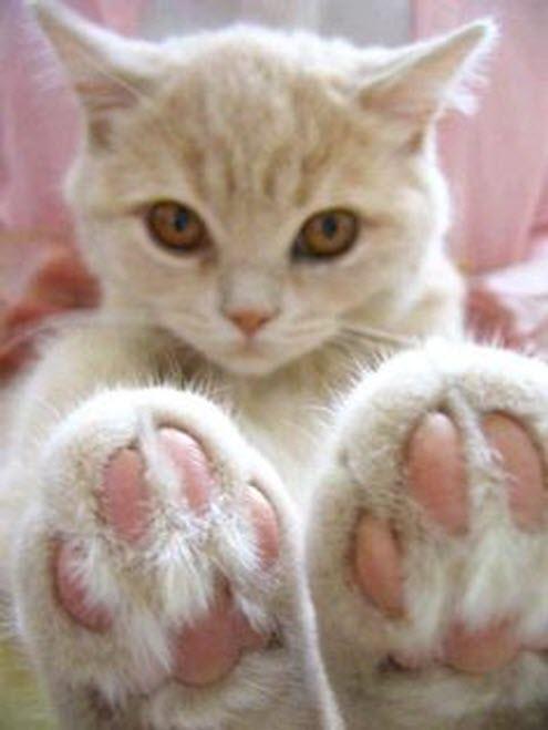 paws 12 (2)