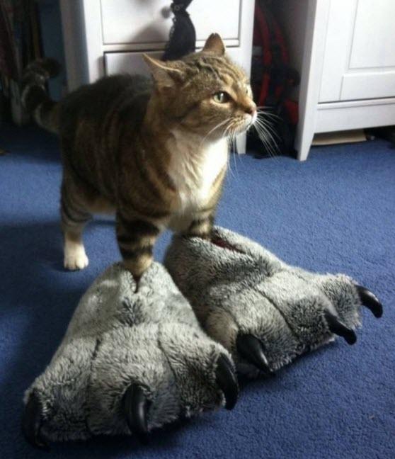 paws 15