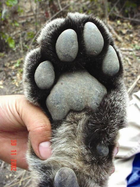 paws 3