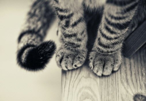paws 4