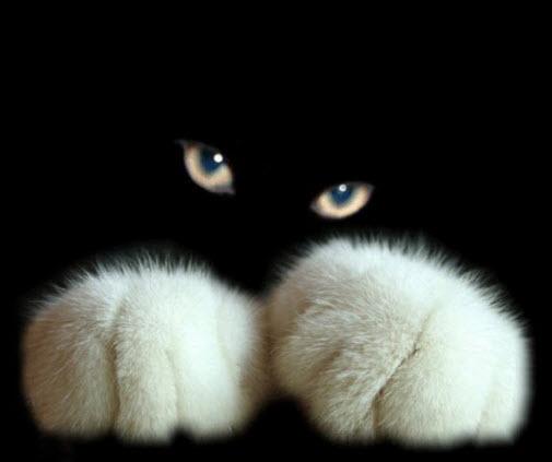 paws 5