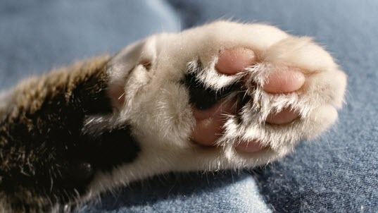 paws 6