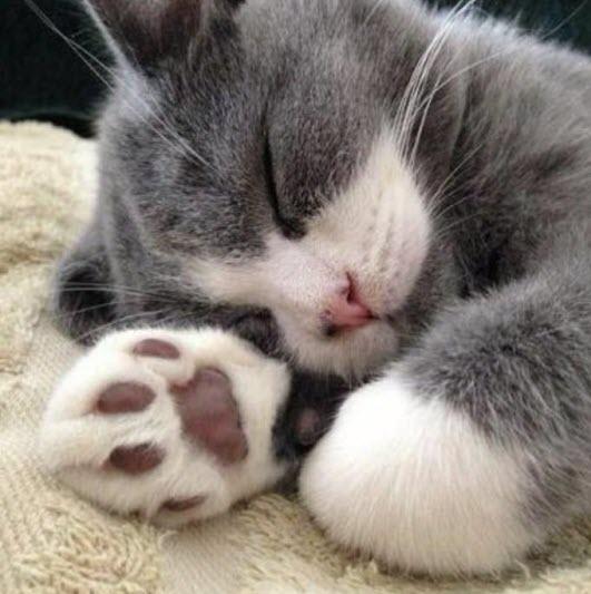 paws 7