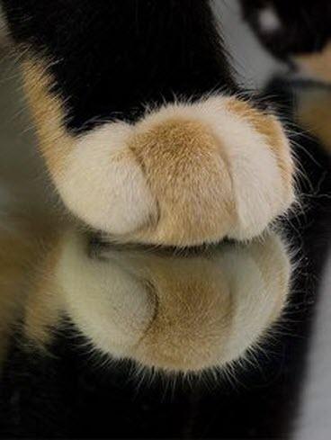 paws 9
