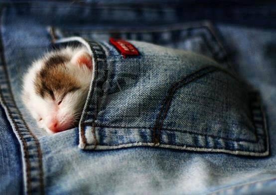 pocket kitty 3