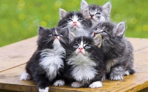 queen kittens
