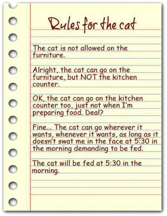 rules for the cat