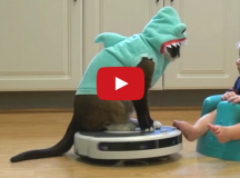 shark cat vs shark baby