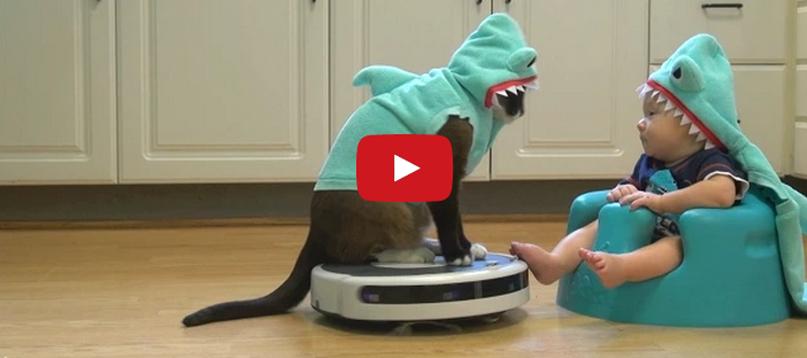 OMG! Shark Cat on a Ro...