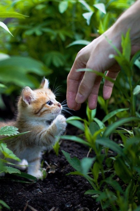 tiny kitten and hand