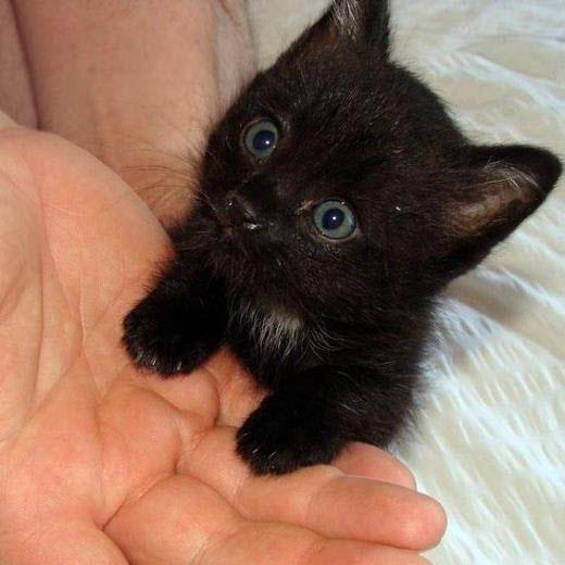 tiny kitten hand