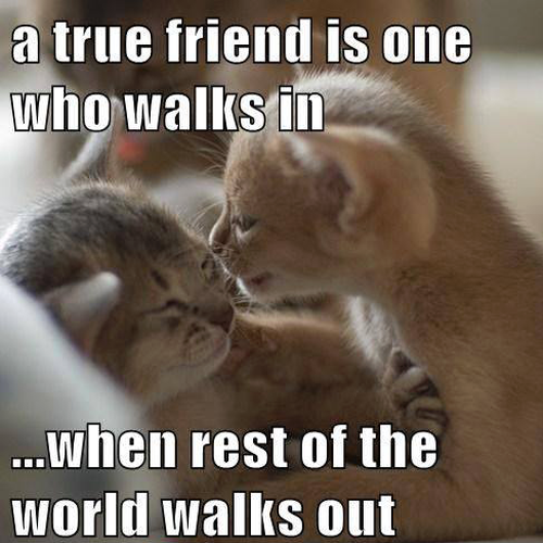 true friend cat