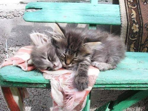 2 kittens on chair