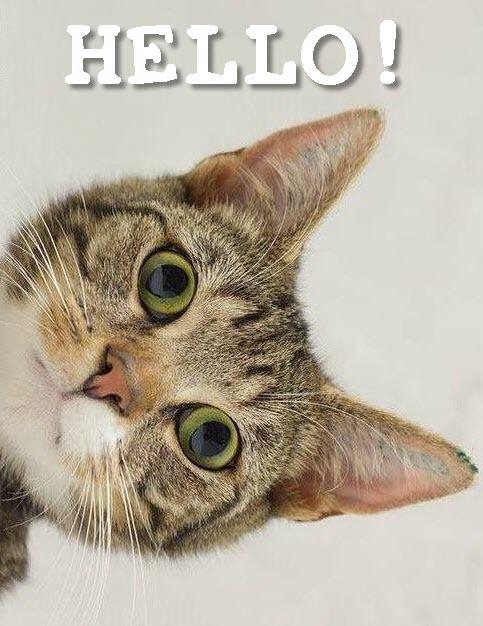 Картинки по запросу hello cat