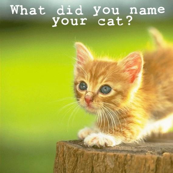 cat name