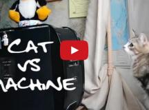 cats vs machine