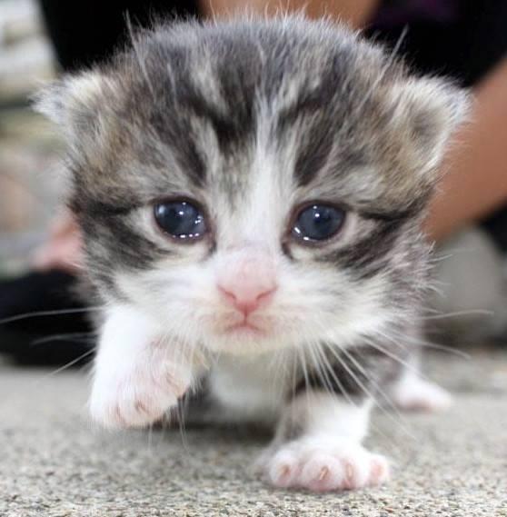 close up kitten