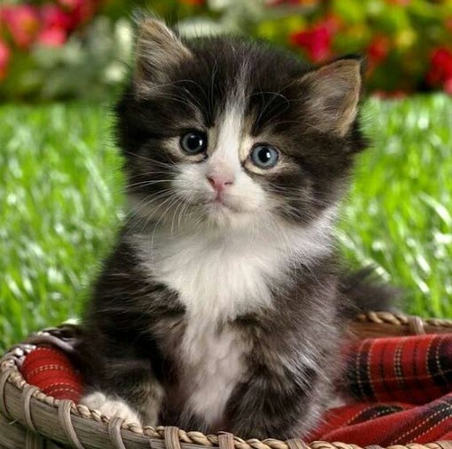 cute in basket