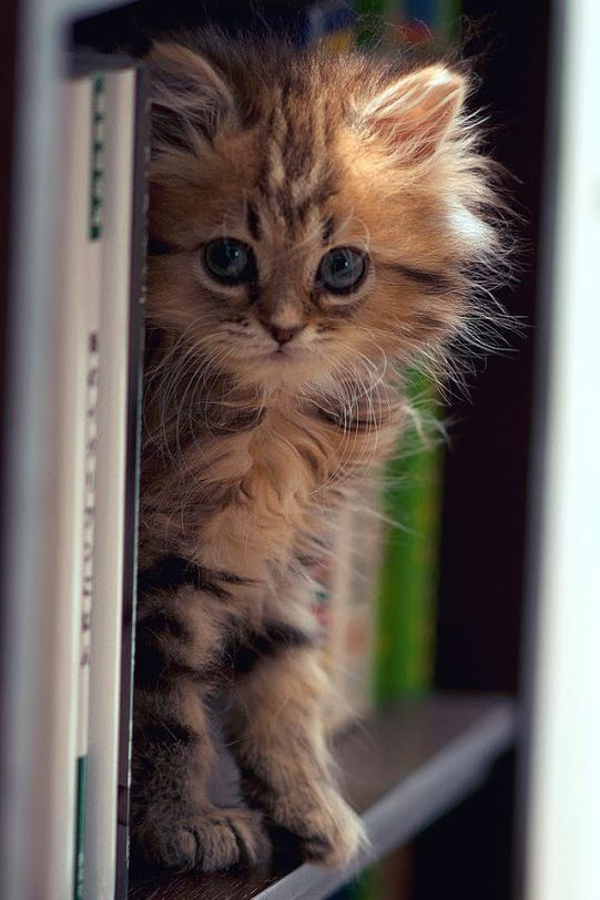 cute kitty books